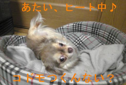 f0123589_21334628.jpg