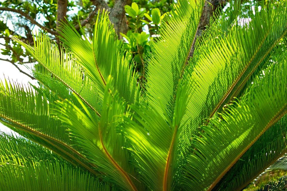 島の緑_c0124795_8522380.jpg