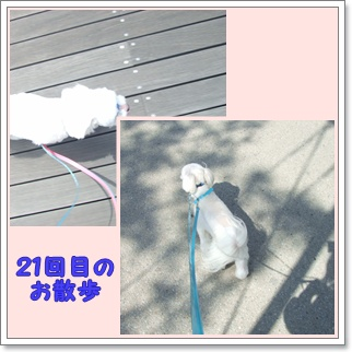 f0148595_20241031.jpg