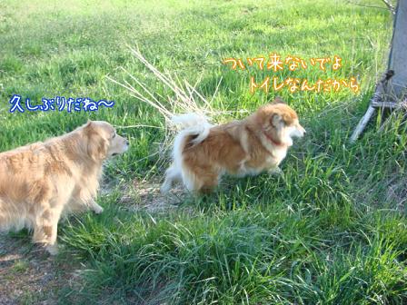 2度の飯よりボール遊び_f0064906_17172787.jpg