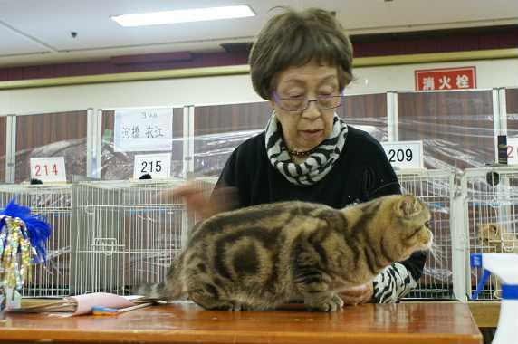 今期最終CAT SHOW_e0033609_23435636.jpg
