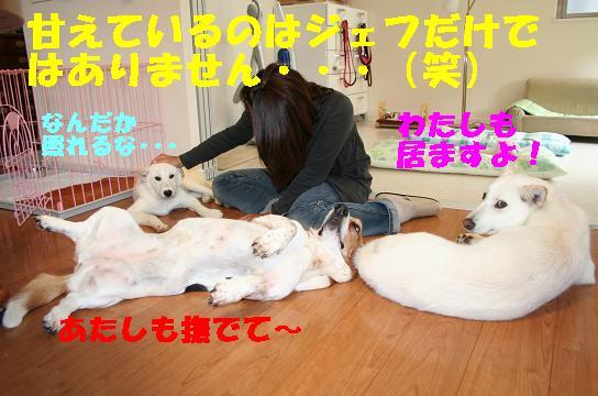 f0121712_1623527.jpg