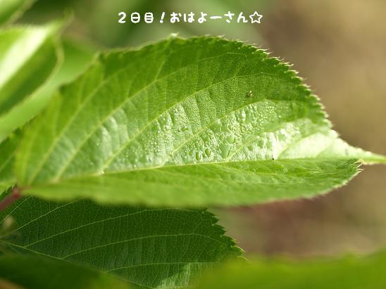 f0133316_15235690.jpg