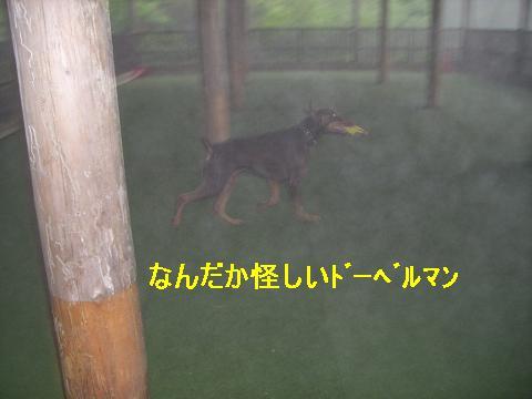 f0129731_0275635.jpg