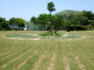 /// 朝野家庭園-瑞宝園ツツジ700本5分咲きになりました(4/29) 連休には満開になりそうです。 ///_f0112434_15461087.jpg
