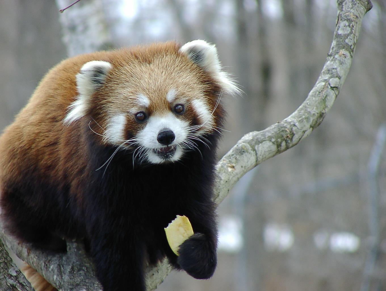 動物園に行こう! 4月29日_f0113639_17144995.jpg