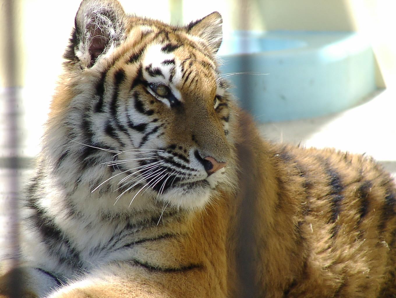 動物園に行こう! 4月29日_f0113639_17162683.jpg