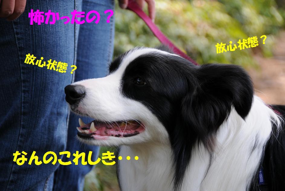 c0147241_2071186.jpg