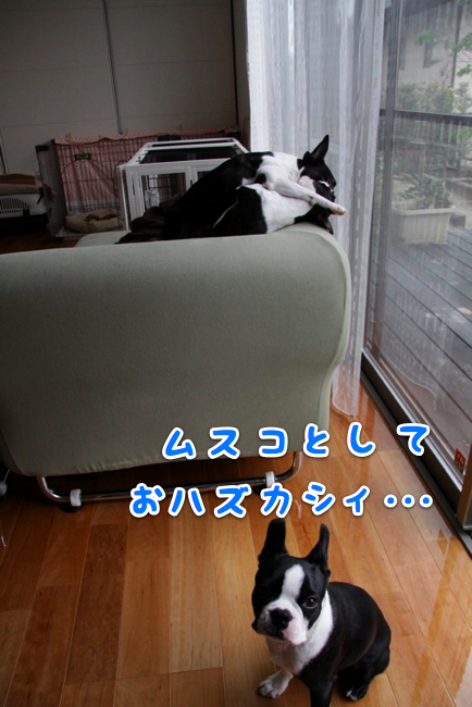 f0166359_21472516.jpg