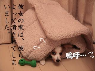 b0170863_191861.jpg