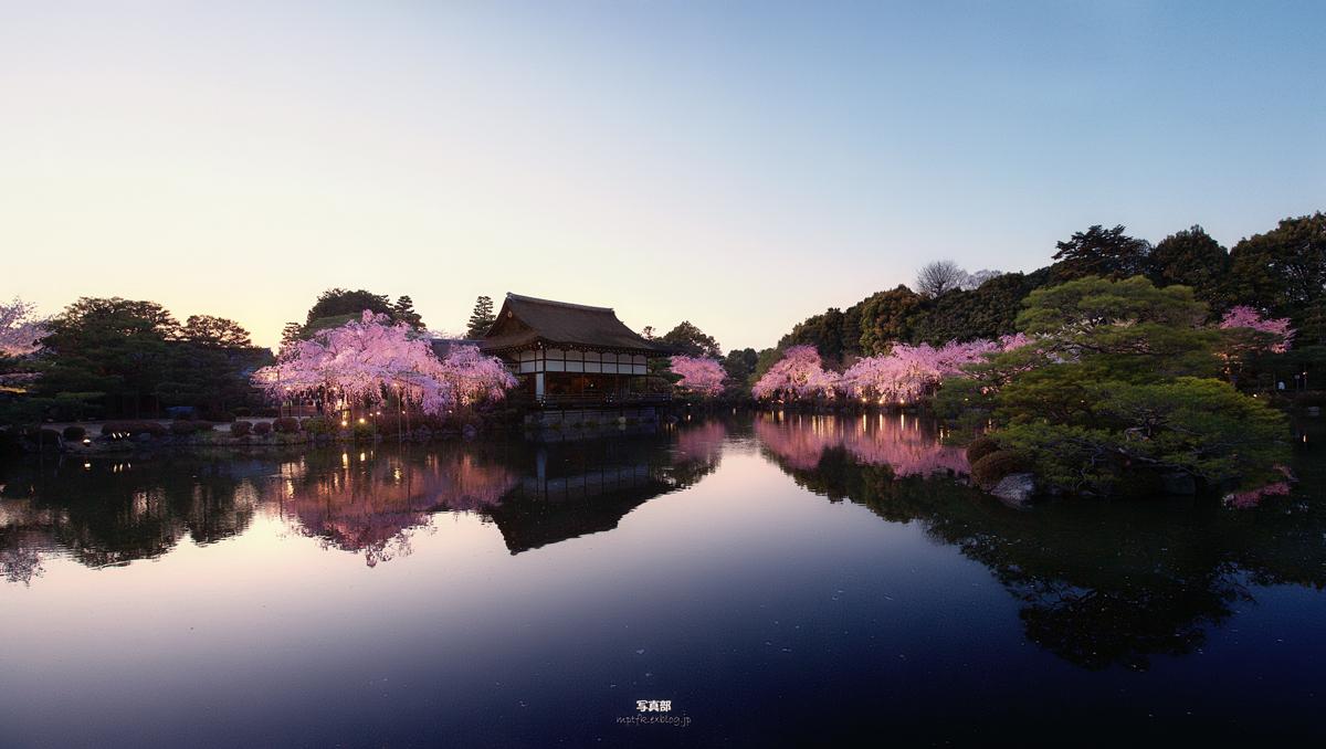 平安神宮 夜桜 5_f0021869_2352810.jpg