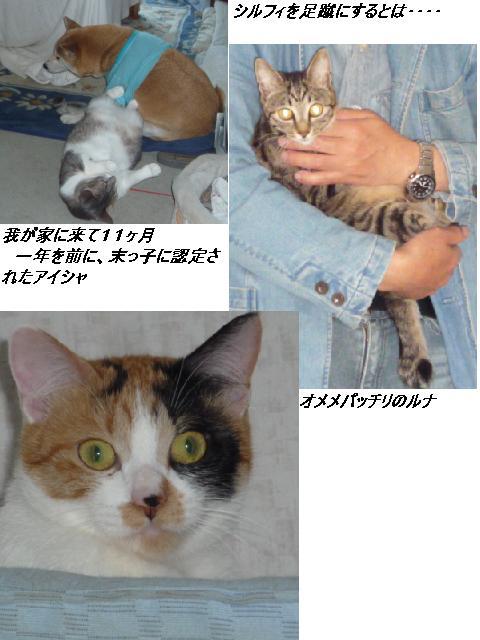 b0112380_18351972.jpg
