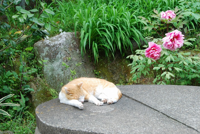 鎌倉③_c0187781_10234283.jpg