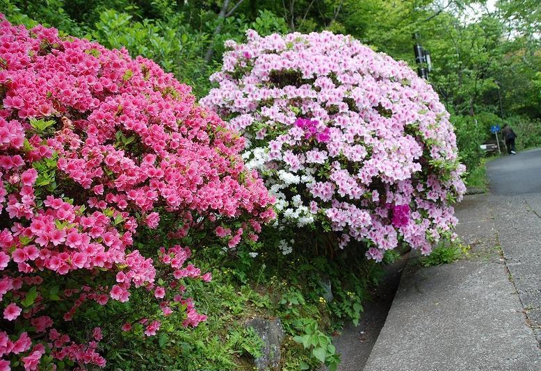 鎌倉③_c0187781_11274258.jpg