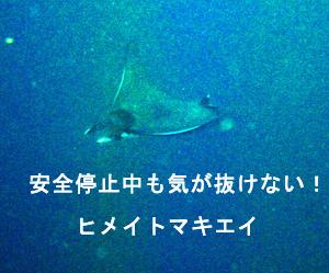 f0144385_1702051.jpg
