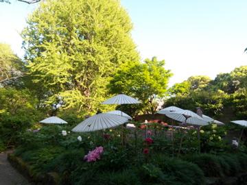 上野公園から歩いて千尋ちゃん宅に出張調理!_c0180686_0234943.jpg