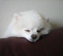 白熊の子供_e0169493_23214358.jpg