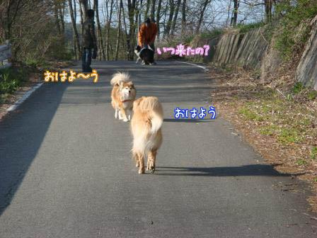 久しぶりにみんなに会えた朝の散歩_f0064906_1746335.jpg