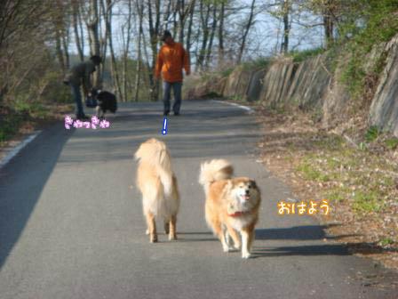 久しぶりにみんなに会えた朝の散歩_f0064906_17482973.jpg
