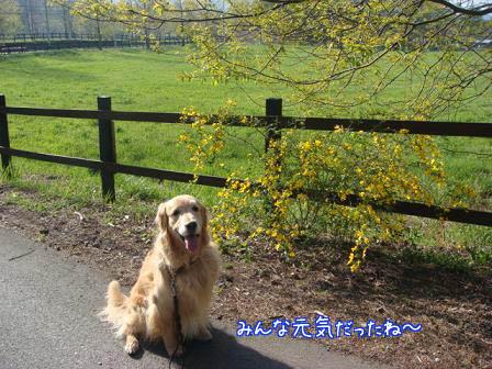 久しぶりにみんなに会えた朝の散歩_f0064906_1751343.jpg