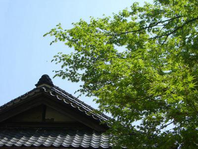 新緑_f0138807_9232337.jpg