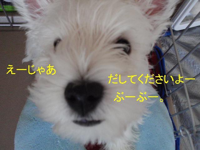 b0175712_10512943.jpg