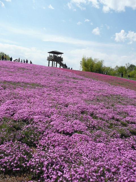 お花見遠足 市貝町ととっちゃん家_b0116313_1622734.jpg