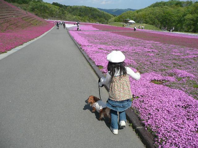 お花見遠足 市貝町ととっちゃん家_b0116313_1629244.jpg