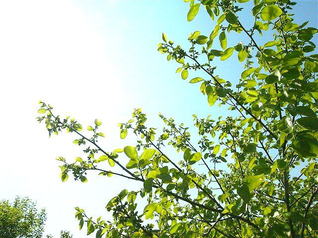 命萌ゆる春の別離_c0116714_132638.jpg
