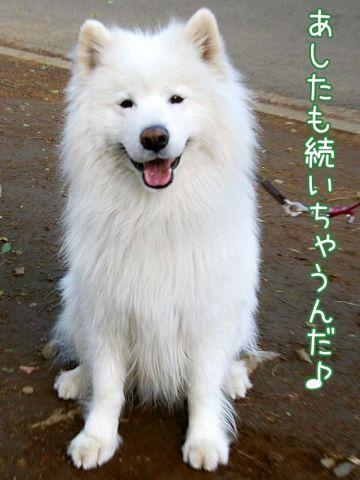 ウマウマ昭和の日_c0062832_164294.jpg