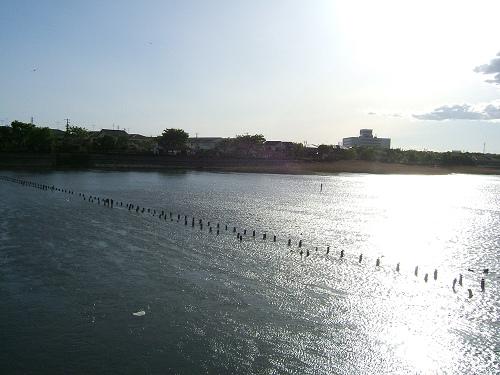 谷津干潟探訪その4 帰り際に見た鳥_e0089232_5552.jpg
