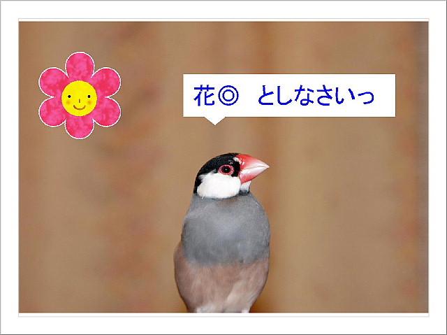 a0019545_18491639.jpg