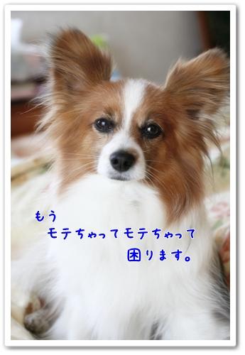 d0013149_2372654.jpg