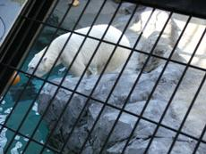 旭山動物園_f0128761_2126464.jpg