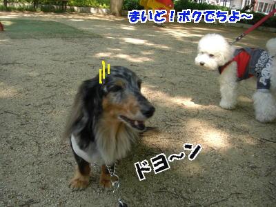 d0020869_2010359.jpg