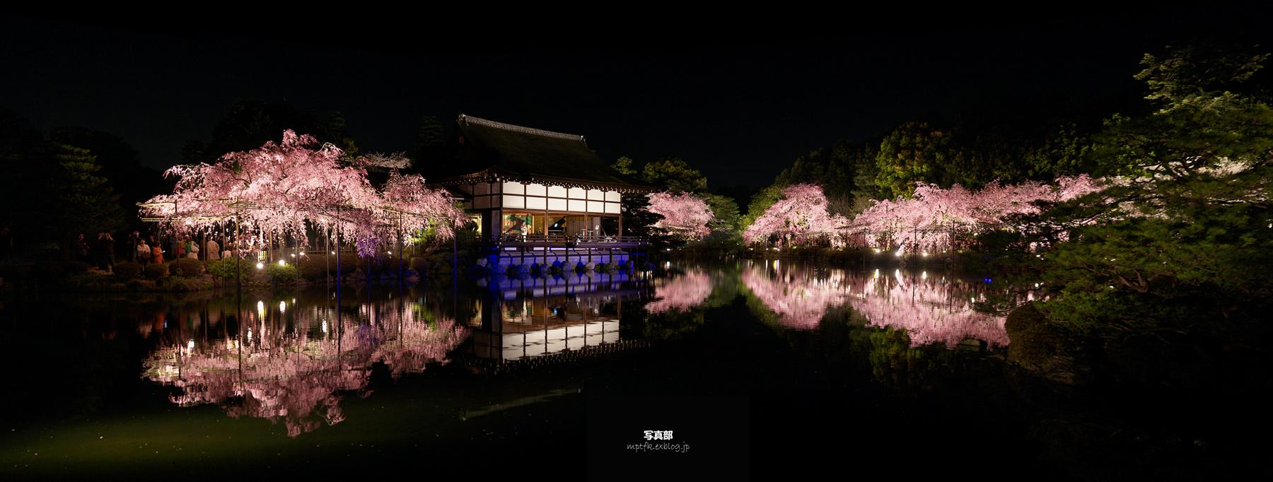 平安神宮 夜桜 6_f0021869_2215158.jpg