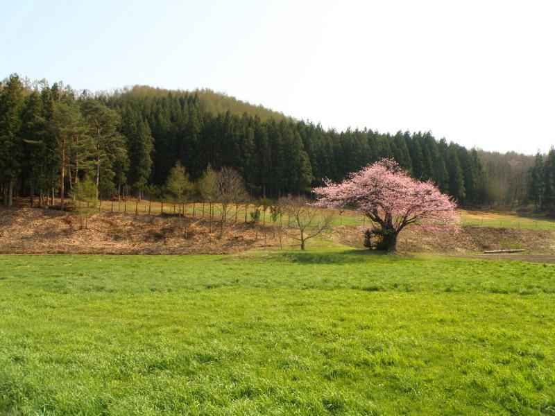 遠野の桜_f0075075_1632111.jpg