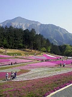 秩父の芝桜_e0013178_1726334.jpg