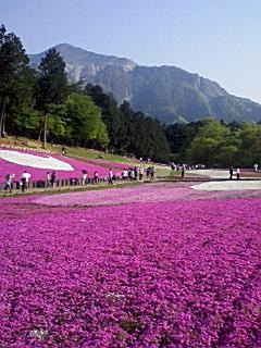 秩父の芝桜_e0013178_172637.jpg