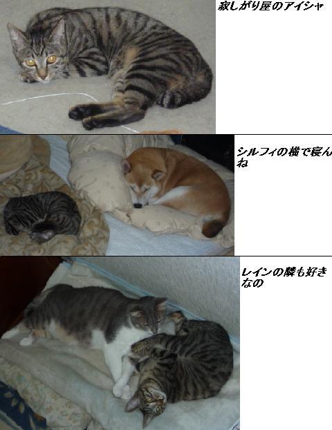b0112380_10554515.jpg
