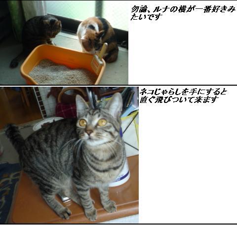 b0112380_10583470.jpg