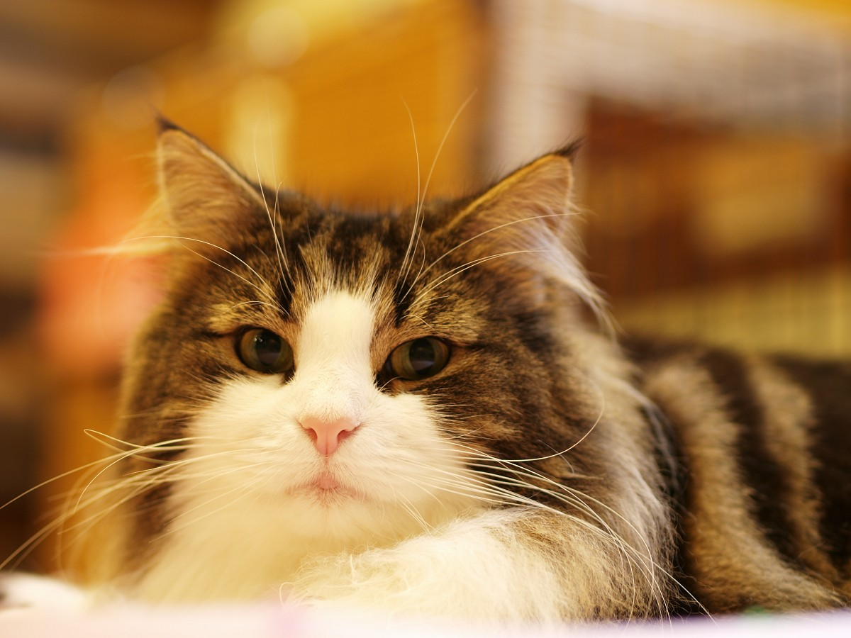 猫カフェのつづき。_c0187587_10563512.jpg