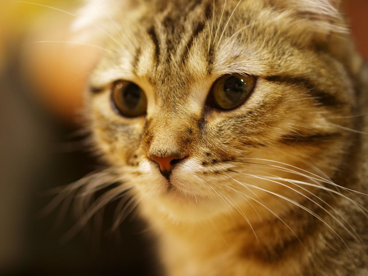 猫カフェのつづき。_c0187587_10583981.jpg