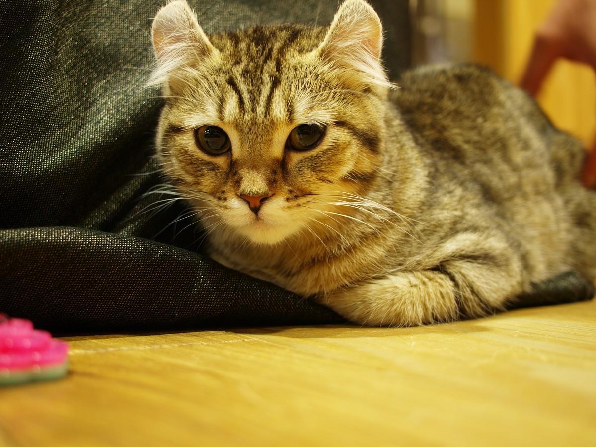 猫カフェのつづき。_c0187587_1121969.jpg