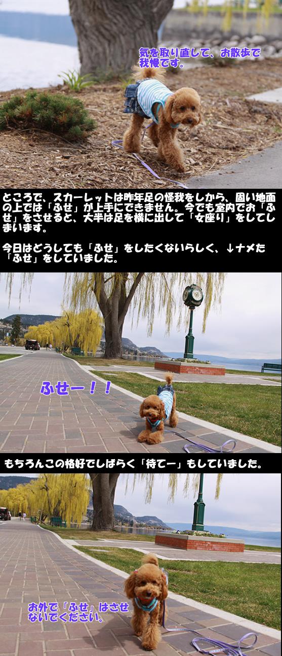 c0164491_655955.jpg