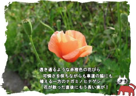 f0137096_145159100.jpg