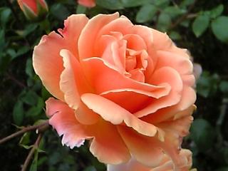 うちの庭_b0176010_12512199.jpg