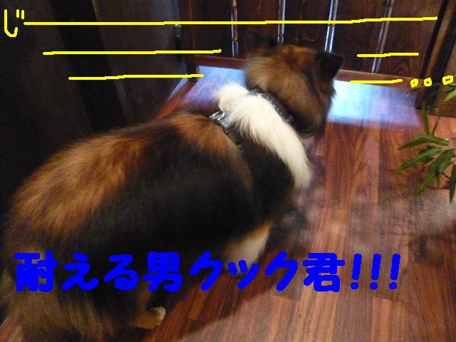 b0130018_10264591.jpg