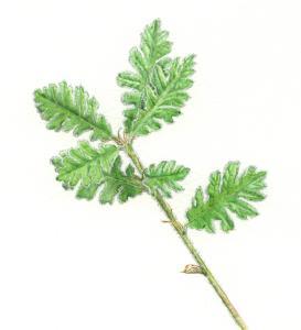 木を植えた その後_c0177135_21545688.jpg