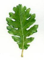 木を植えた その後_c0177135_22122930.jpg